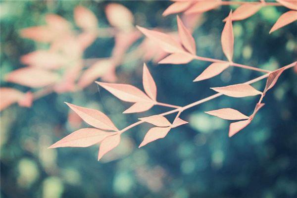 浅红色树叶,五格数理起名推荐
