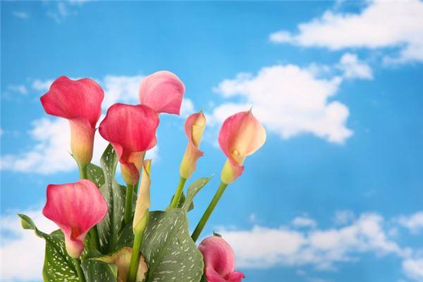 花朵-五格数理