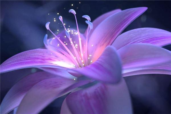 紫色好看的花朵