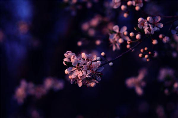 小花瓣花朵