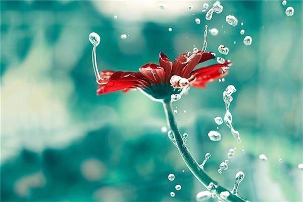 水滴效果的红色小菊花