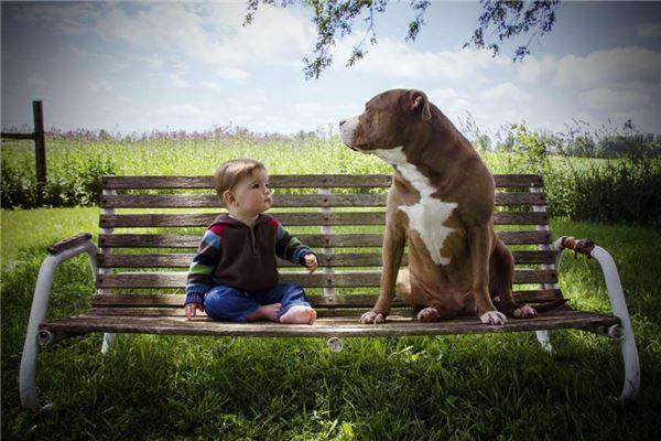 小宝宝与小狗