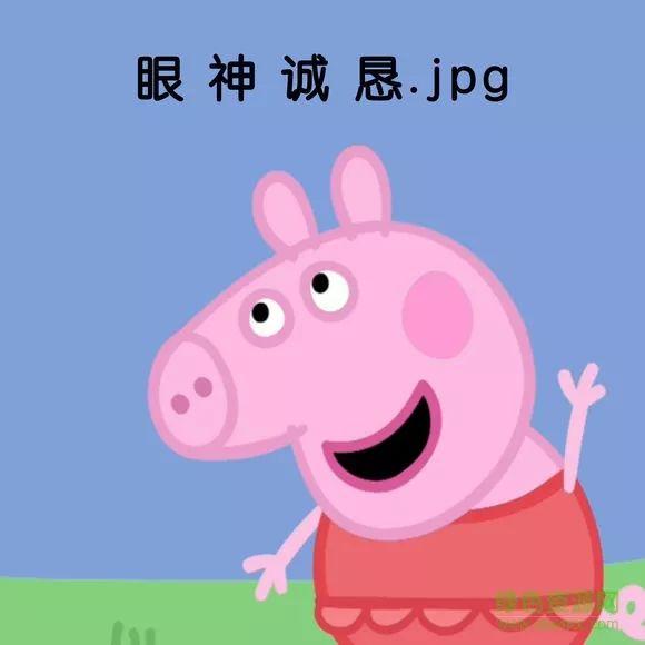 小猪佩奇眼神诚恳