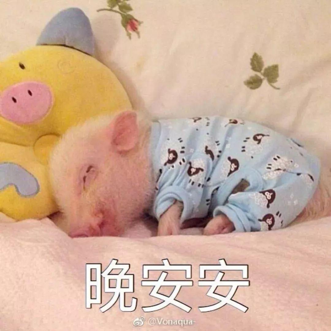 晚安小粉猪
